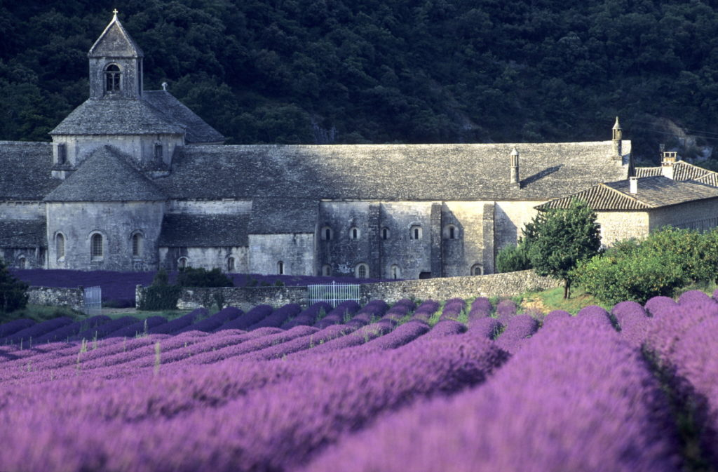 Lavender fields in bloom in front of Senanque Abbey Provence