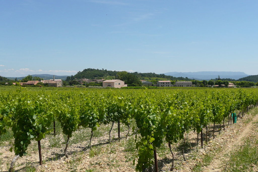 Vineyard in the Luberon south France with vines in the foreground and hills and villages behind