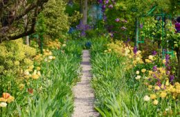 spring garden at Giverny with path between beds of daffodils
