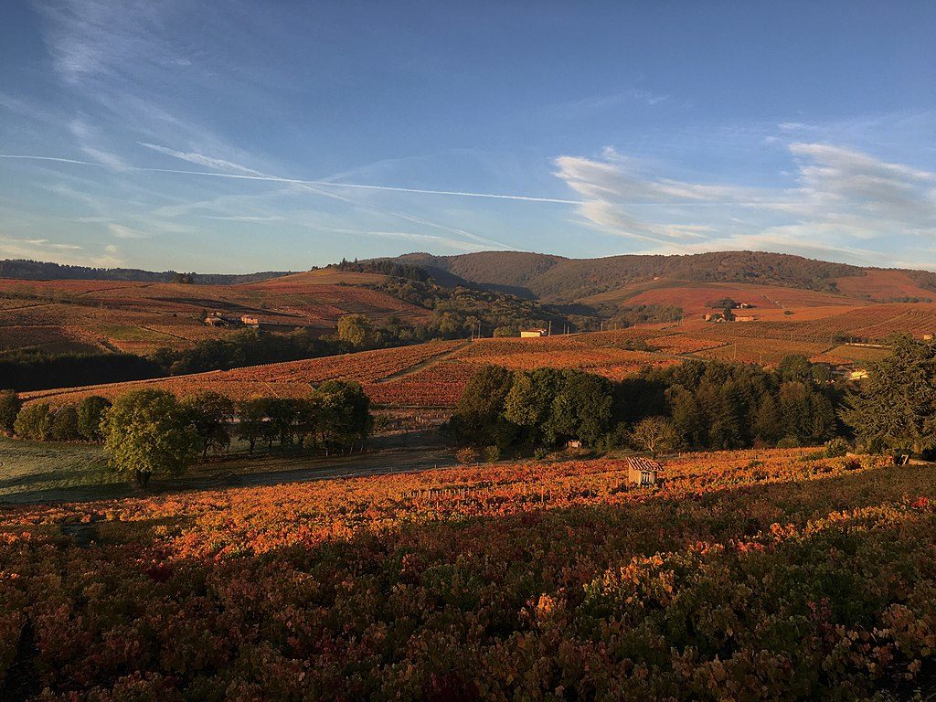 Rolling vineyards in autumn when the vines turn colour