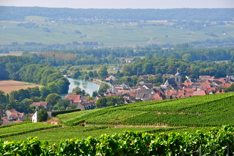 View of Champagne vines from hill above river with Cumieres in the distance